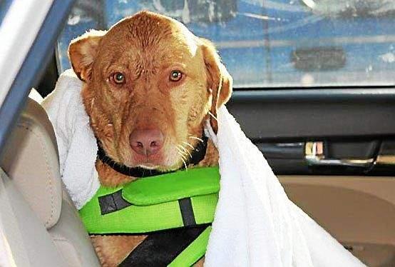 Good Dog!  Good Wet Dog!  Wet Dog Good!